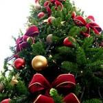 Onde Comprar Árvore de Natal